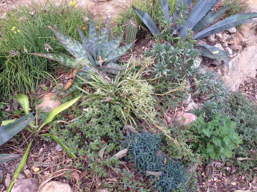 (24) Petit jardin exotique à la Roque-Gageac Img_4016