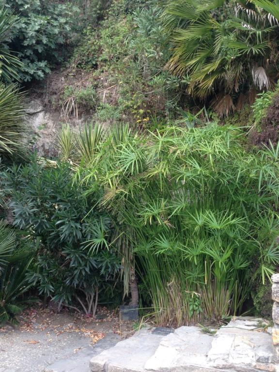 (24) Petit jardin exotique à la Roque-Gageac Img_4018