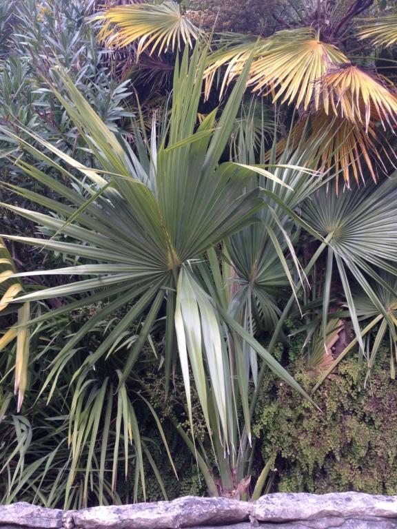(24) Petit jardin exotique à la Roque-Gageac Img_4021
