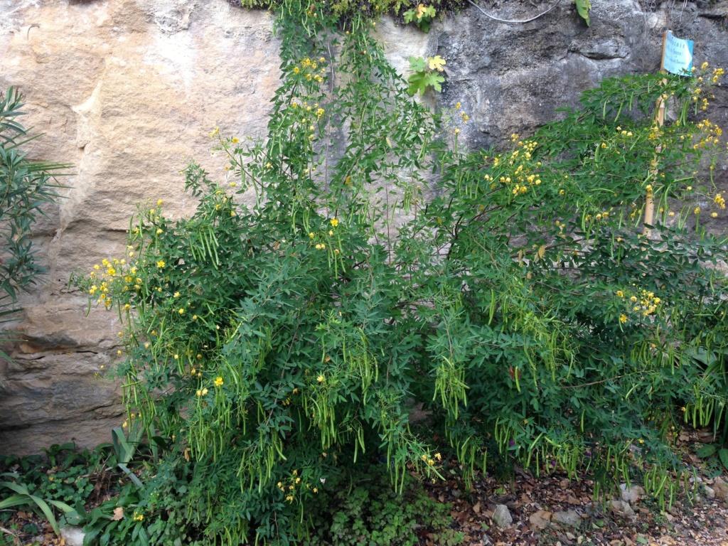 (24) Petit jardin exotique à la Roque-Gageac Img_4022