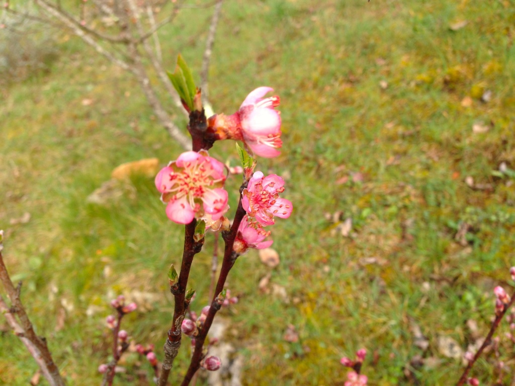 brins de printemps - Page 2 Img_4311