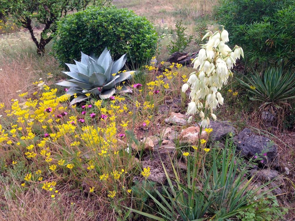 chaleureuses floraisons Img_4510