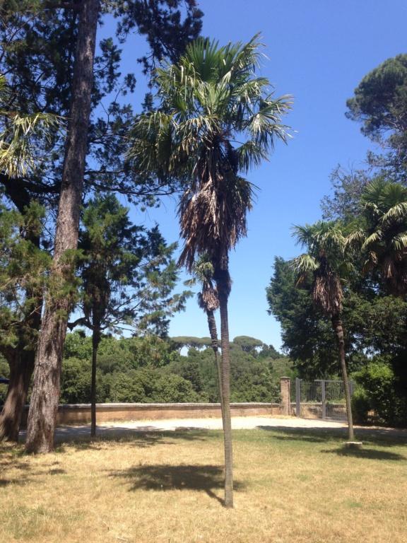 Trachycarpus fortunei - Page 10 Img_4522