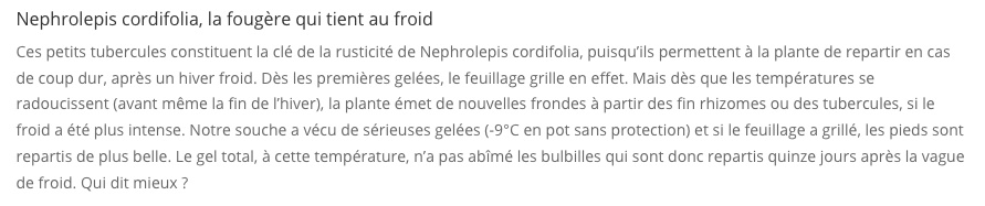 Nephrolepis cordifolia Nephro10