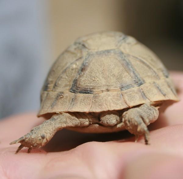 identification de mes tortues N2210