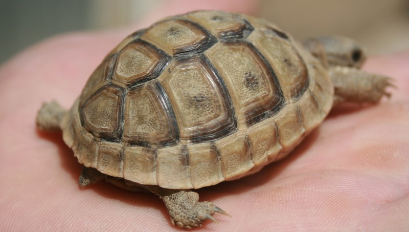 identification de mes tortues N410