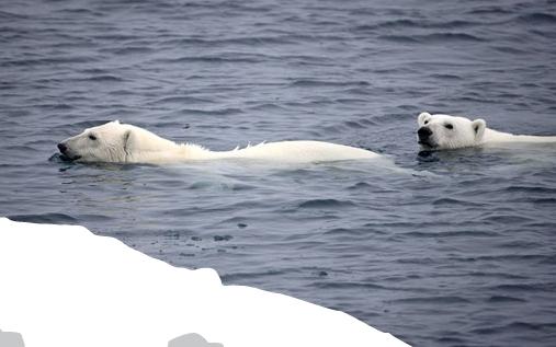 Pétition Pour la protection de L'arctic / Pole Nord / Greenpeace Visu_p10