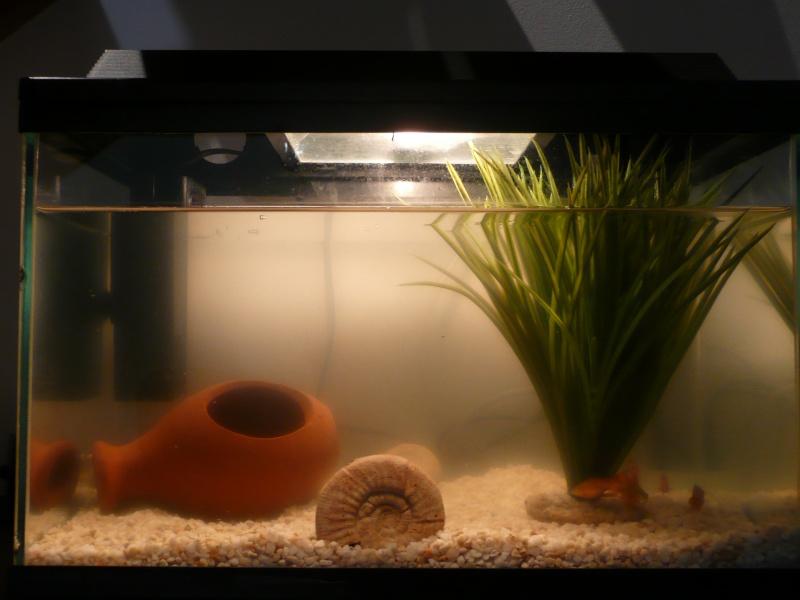 Mon aquarium P1050211