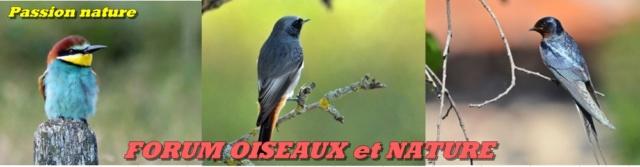 Forum OISEAUX et NATURE