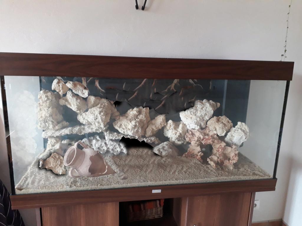 Notre aquarium  20190511