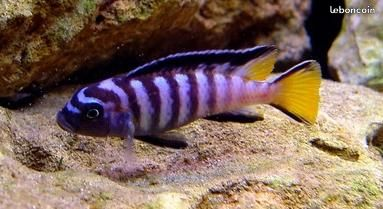 Notre aquarium  63302511