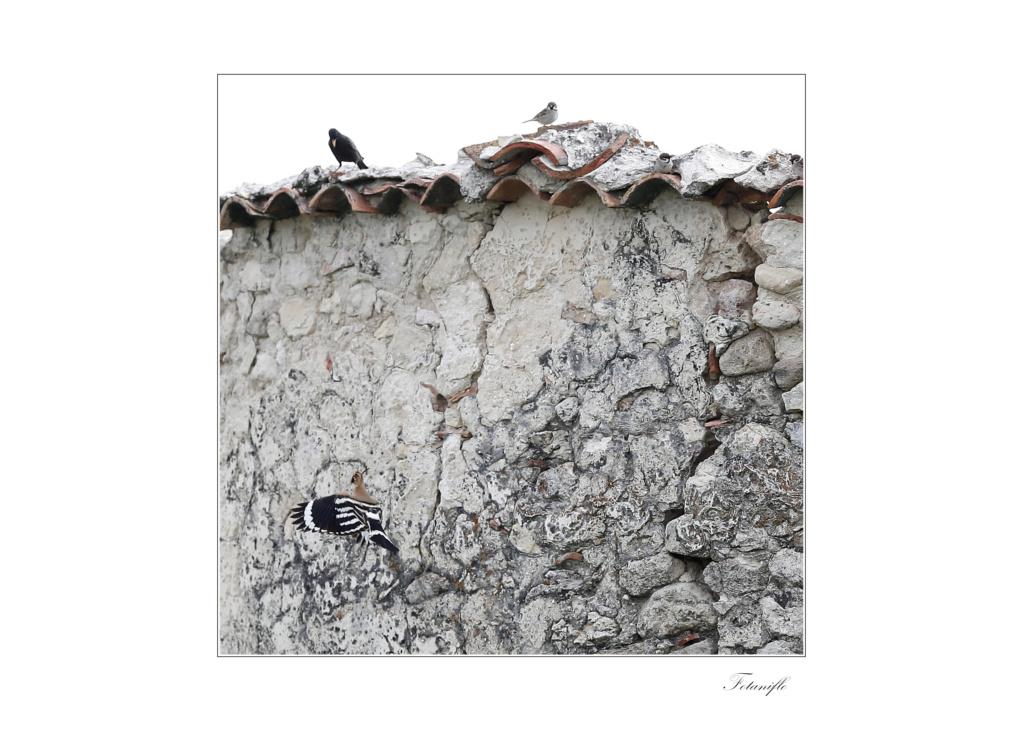 photo d'Espagne 1a12