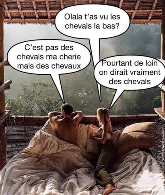 La blague du jour... - Page 6 Cheval10