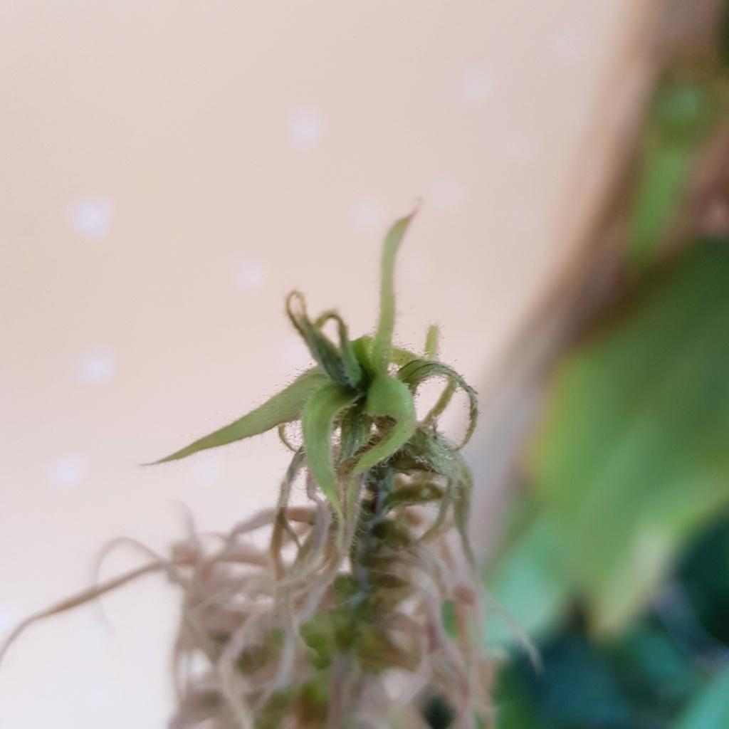 Problème roridula gorgonias 15369910