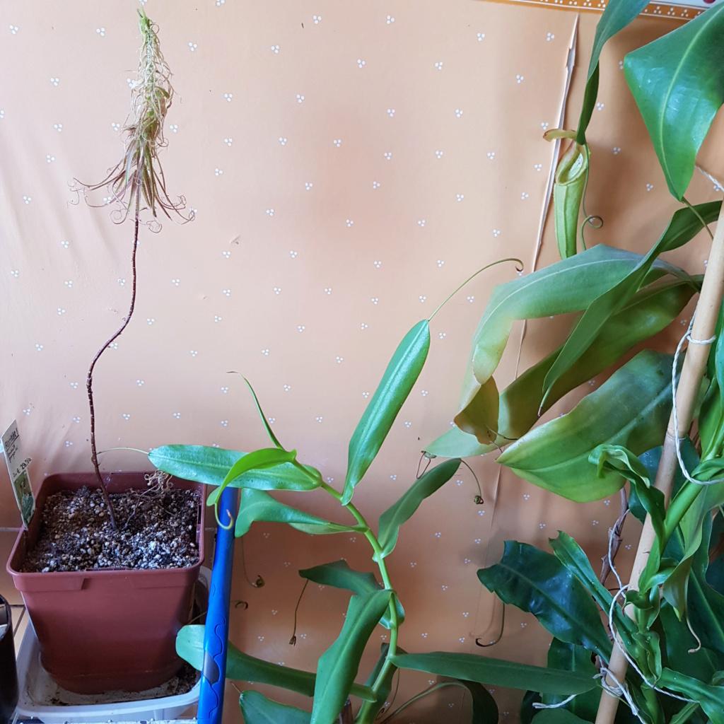 Problème roridula gorgonias 15369911