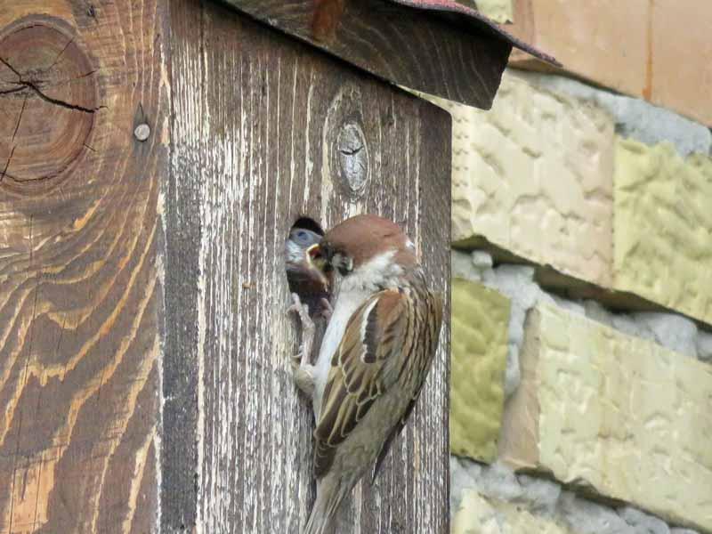 Oiseaux de Bulgarie. - Page 4 Img_6910