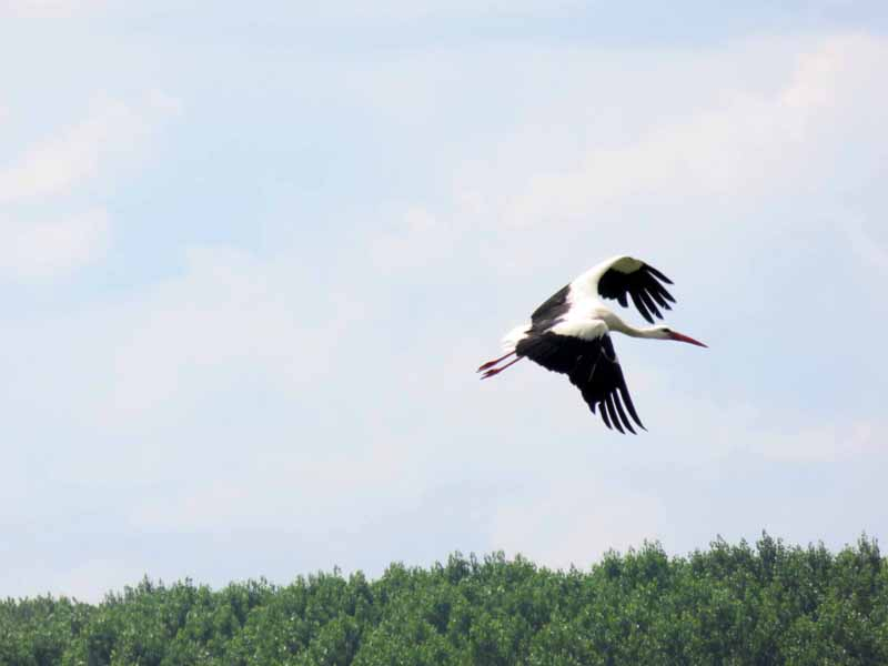 Oiseaux de Bulgarie. - Page 4 Img_6911