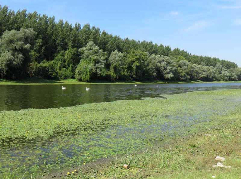 Le lac des cygnes. Img_7213