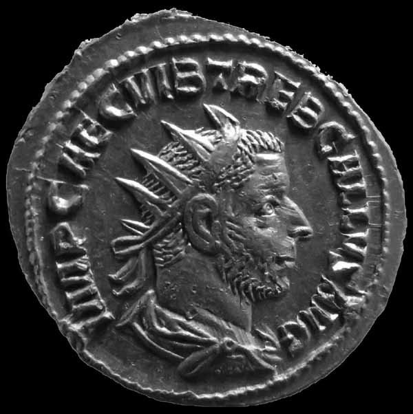 Trebonian gallus Img_7816