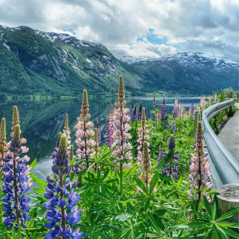 Роскошные пейзажи Норвегии - Страница 12 Qpxhnd10