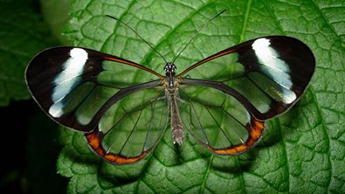 Vahintoos [T: insecto] [L: islas illidenses] [D: fácil] 1111117