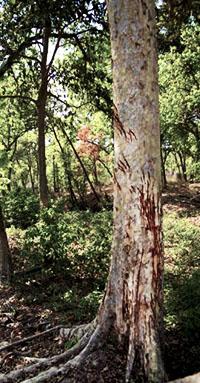 Saurio Invisible [T.: reptil] [L.: bosques del este y pantano] [D.: media] 33310