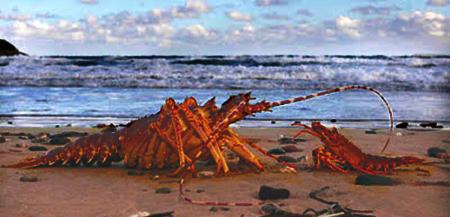 Langostruosidad [T. Crustáceo] [L. Playa Verisar] [D. Difícil] 33322211