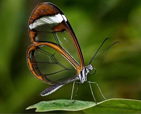 Vahintoos [T: insecto] [L: islas illidenses] [D: fácil] 3333310