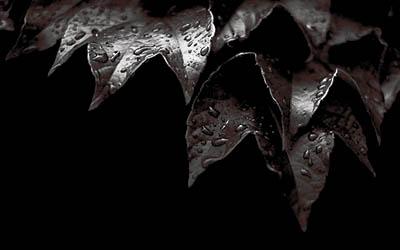 Ullúme Fírima [T: Arbol] [L: Oeste de Midgar] [D: Media] 33333316