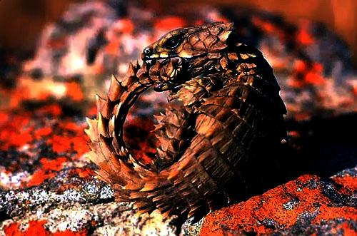 Saurio Invisible [T.: reptil] [L.: bosques del este y pantano] [D.: media] 444412