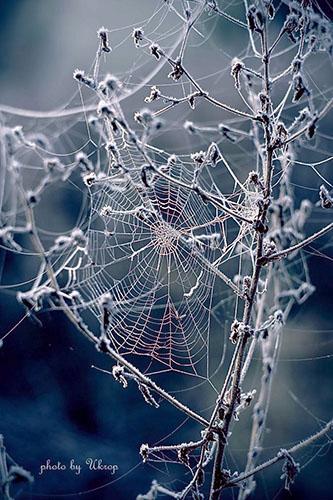 Ahielogs, arañas de cristal [Tipo: Arácnido] [Localización: Dundarak] [Dificultad: Media] Ara210