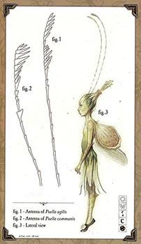 Piskie [T. Féerico] [L. Bosques] [D. Media] C27de211