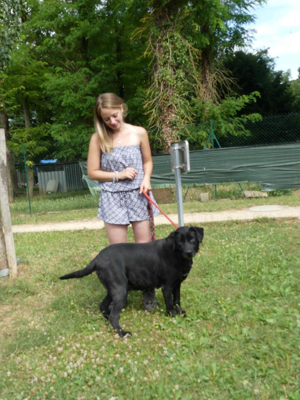 KARA - x labrador 8 ans -Spa de Poitiers (86) 301_r_17