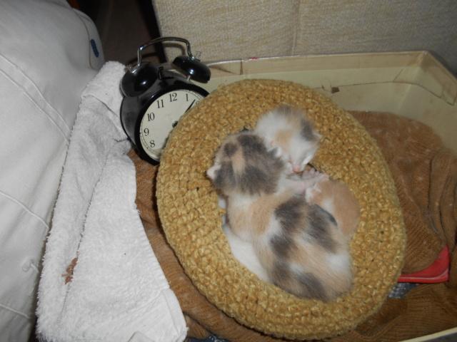 Νεογέννητο γατακι Dscn0711