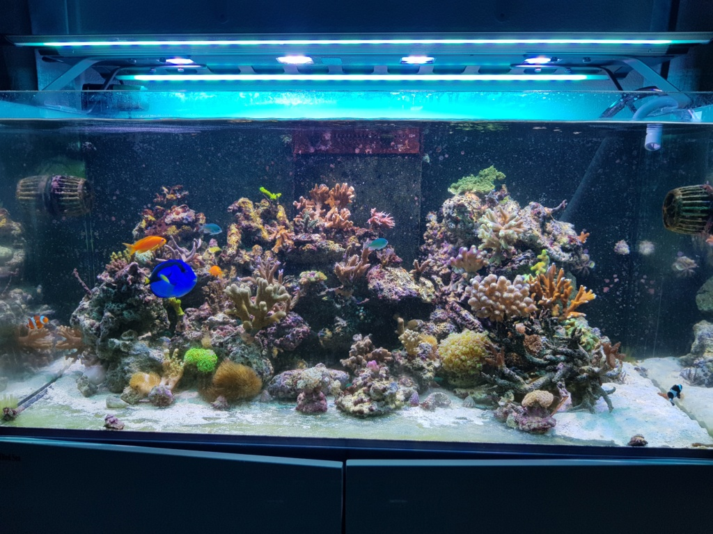 Reefer  425xl de lolyju - Page 3 20180710