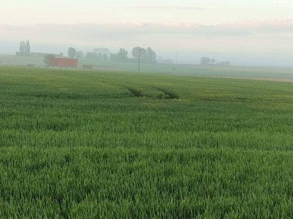 suivi blé 2021 - Page 17 Img_2298