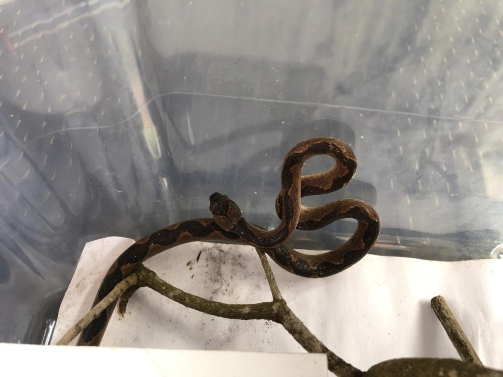 Nouveau serpent  E653f310