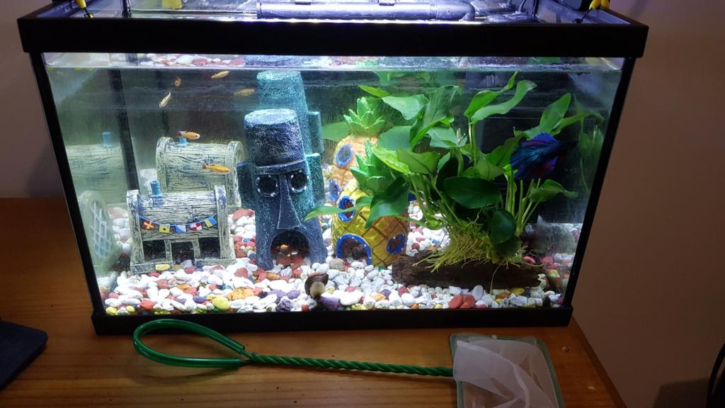 Mon aquarium 20L (nano) 20190210