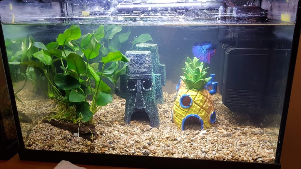 Mon aquarium 20L (nano) 20190214