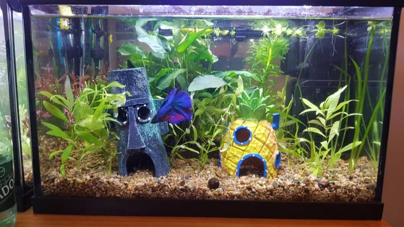Mon aquarium 20L (nano) 20190318