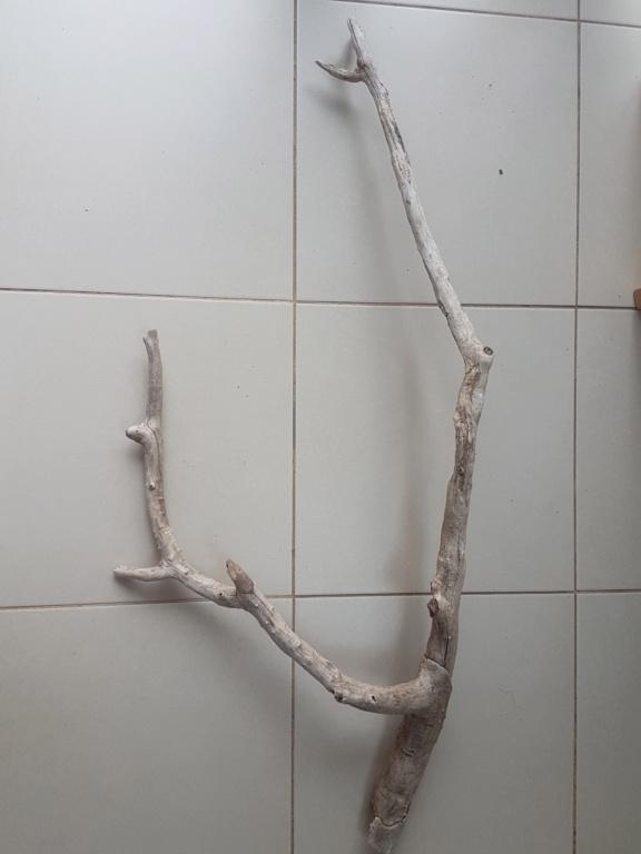 Puis je mettre ce bois dans mon aquarium ? 15545510