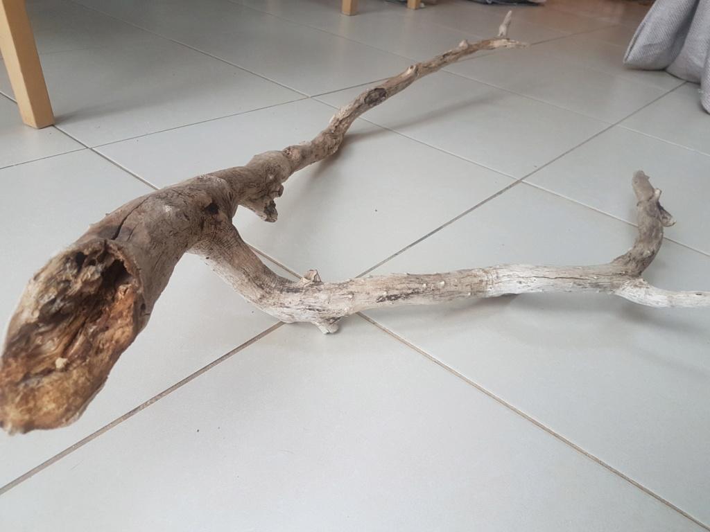 Puis je mettre ce bois dans mon aquarium ? 15545610