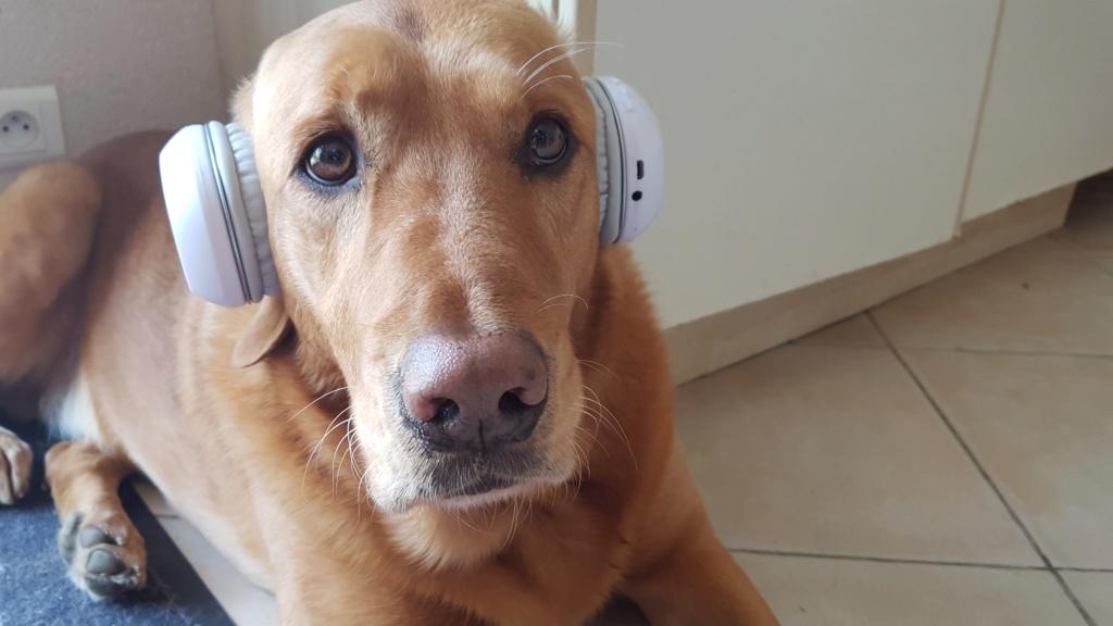 Bouille de mon chien - Pheni 20190511