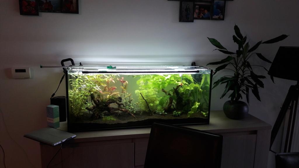 Remise en service aquarium 120L 20180110