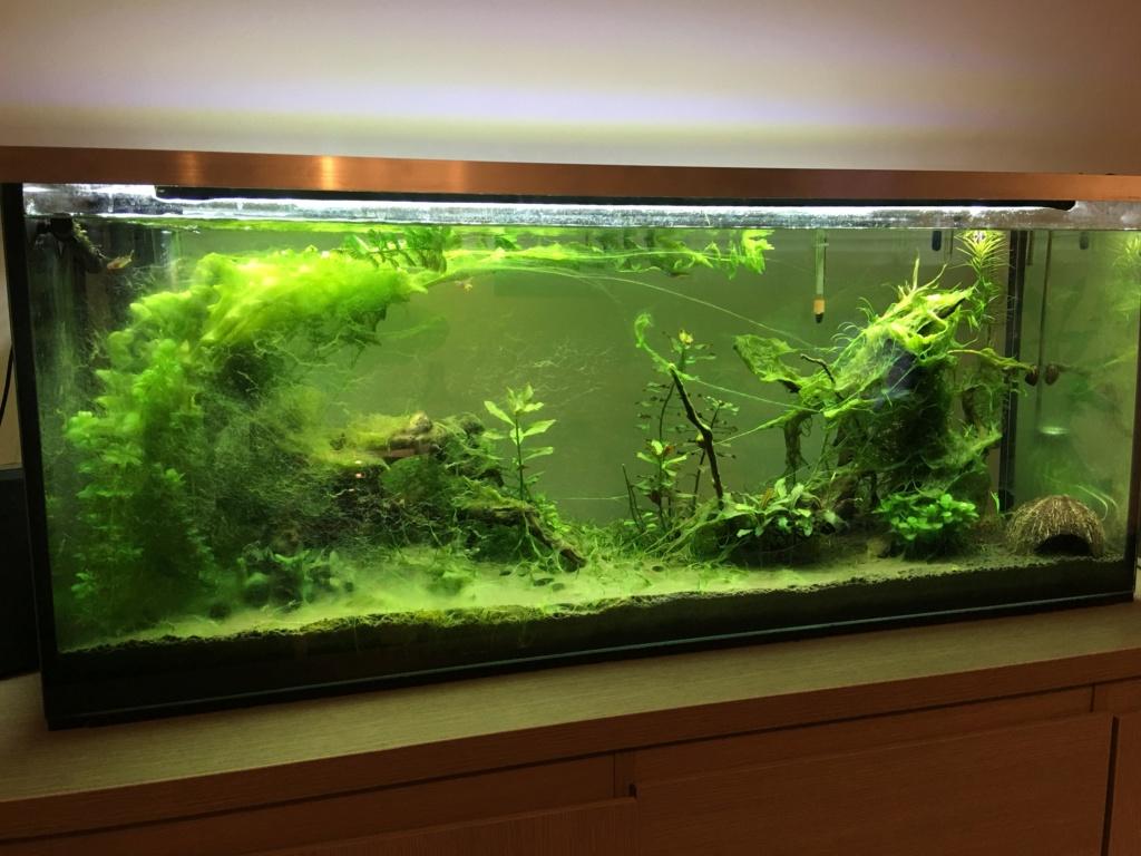 Remise en service aquarium 120L 56071410