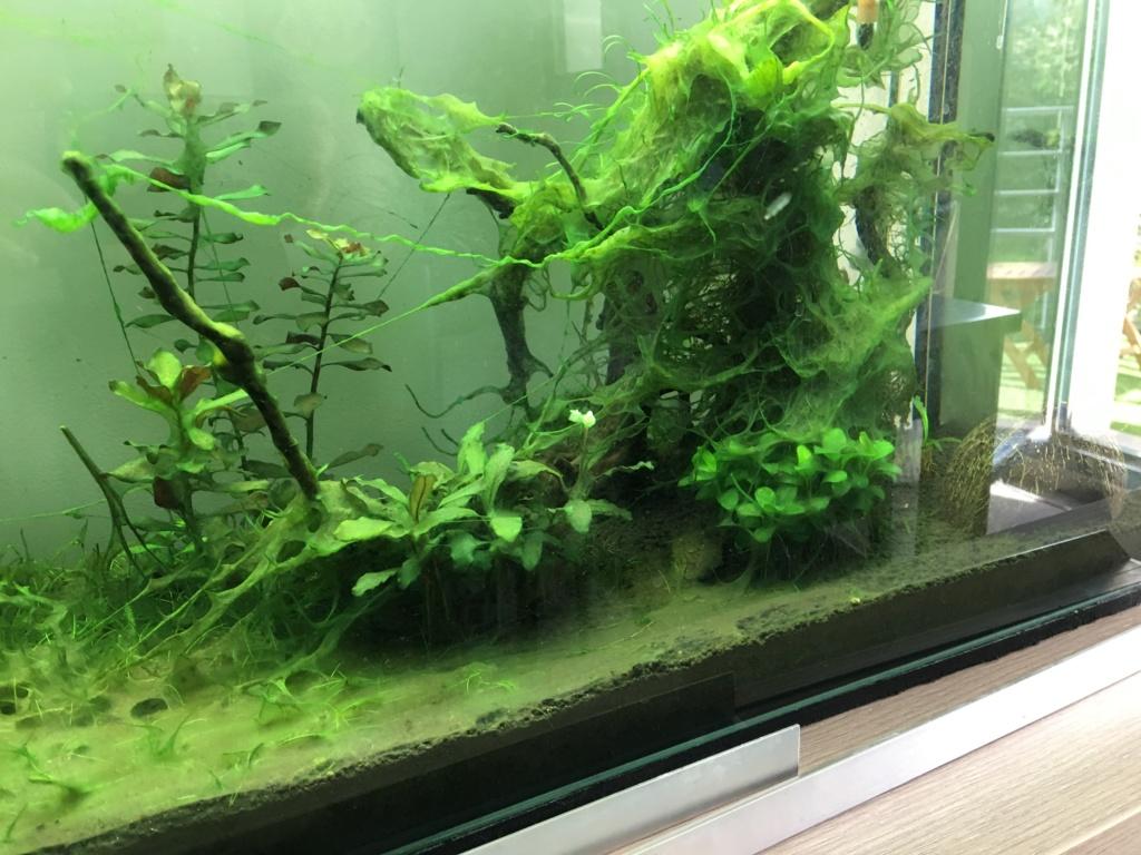 Remise en service aquarium 120L Img-2810