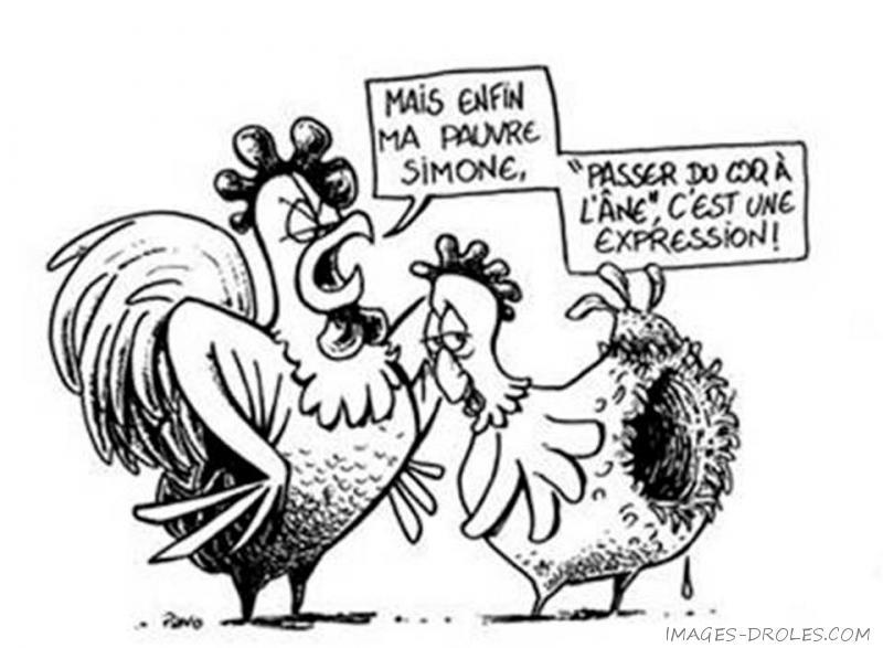 Humour du Jour..toujours :) - Page 14 Poule_10