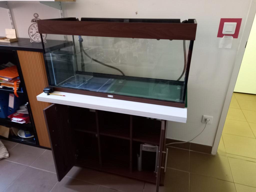 Nouvel aquarium pour Nutella 20210810