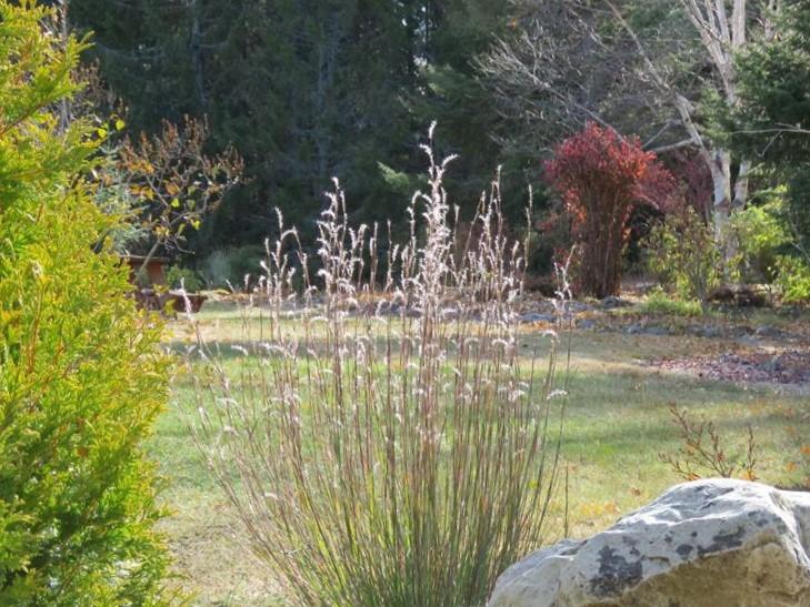 C'est l'automne chez Tulipe 127 - Page 5 Gramin11