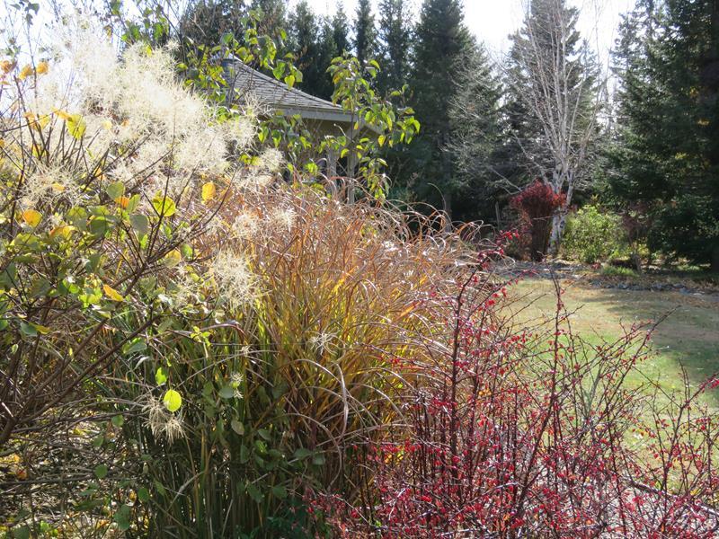 C'est l'automne chez Tulipe 127 - Page 5 Gramin17